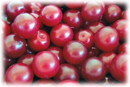 Bienvenidos a finca atxona ciruelas for Ciruela santa rosa